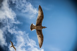 sea-gull-765490__180