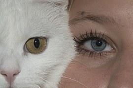 eye-943122__180